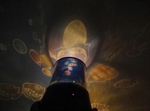 Valentine Gift Idea! MagicLightz LED Undersea World Projection Color Changing Night Light,LED Candle Light, Price/Piece